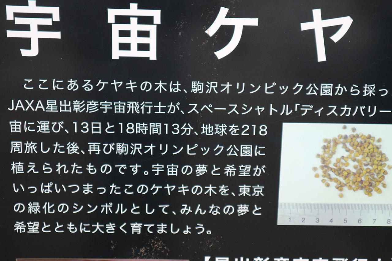 rio-running-keyaki-02