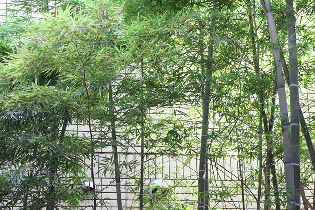 bamboo-spats-towel-01