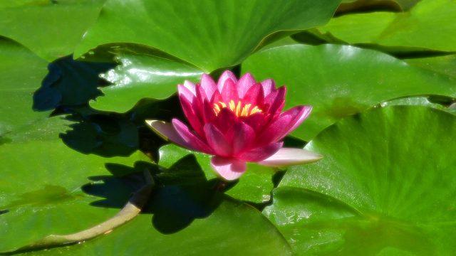 ブッタの悩みが、仏教の原点でありました。