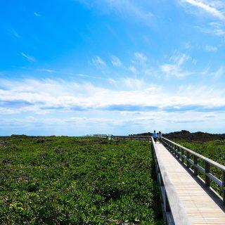 「日常の悟り道」を継続して歩むと人生の道がハイヤーに切り開かれる!