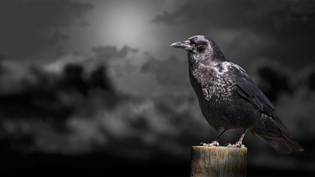 人間の闇は毛嫌いすると世界に闇が増えるのだ・・!