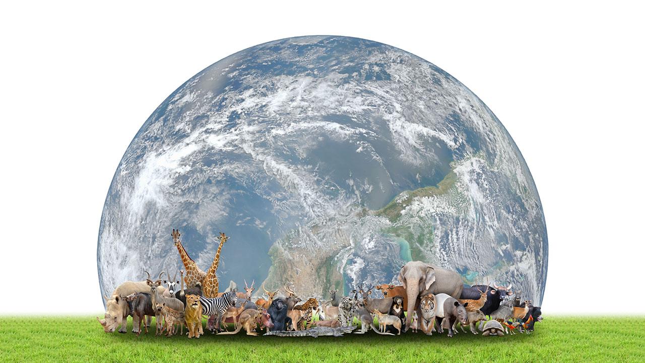 美しい惑星は人間だけの惑星ではない。