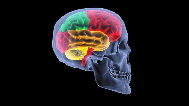 脳と魂の合体が進化する方法かもしれません?
