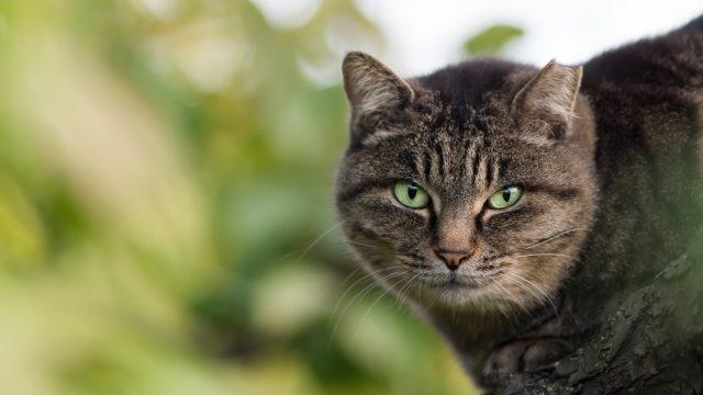 黒い烏と黒い猫に教えてもらって危機一発!ギリギリセーフ!
