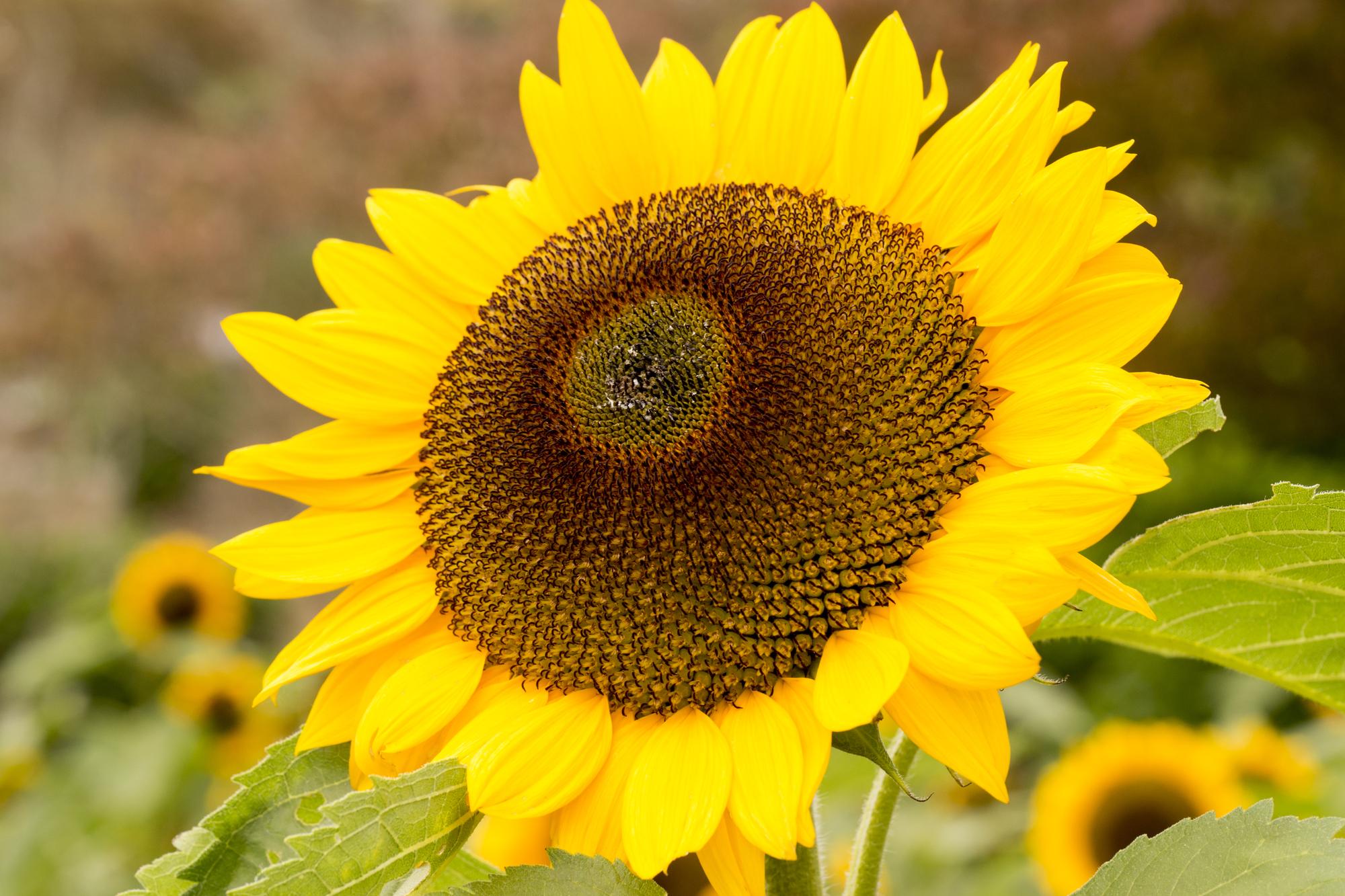 宇宙は「トーラス体」でできている!人間もその一部として花を咲かせよう!