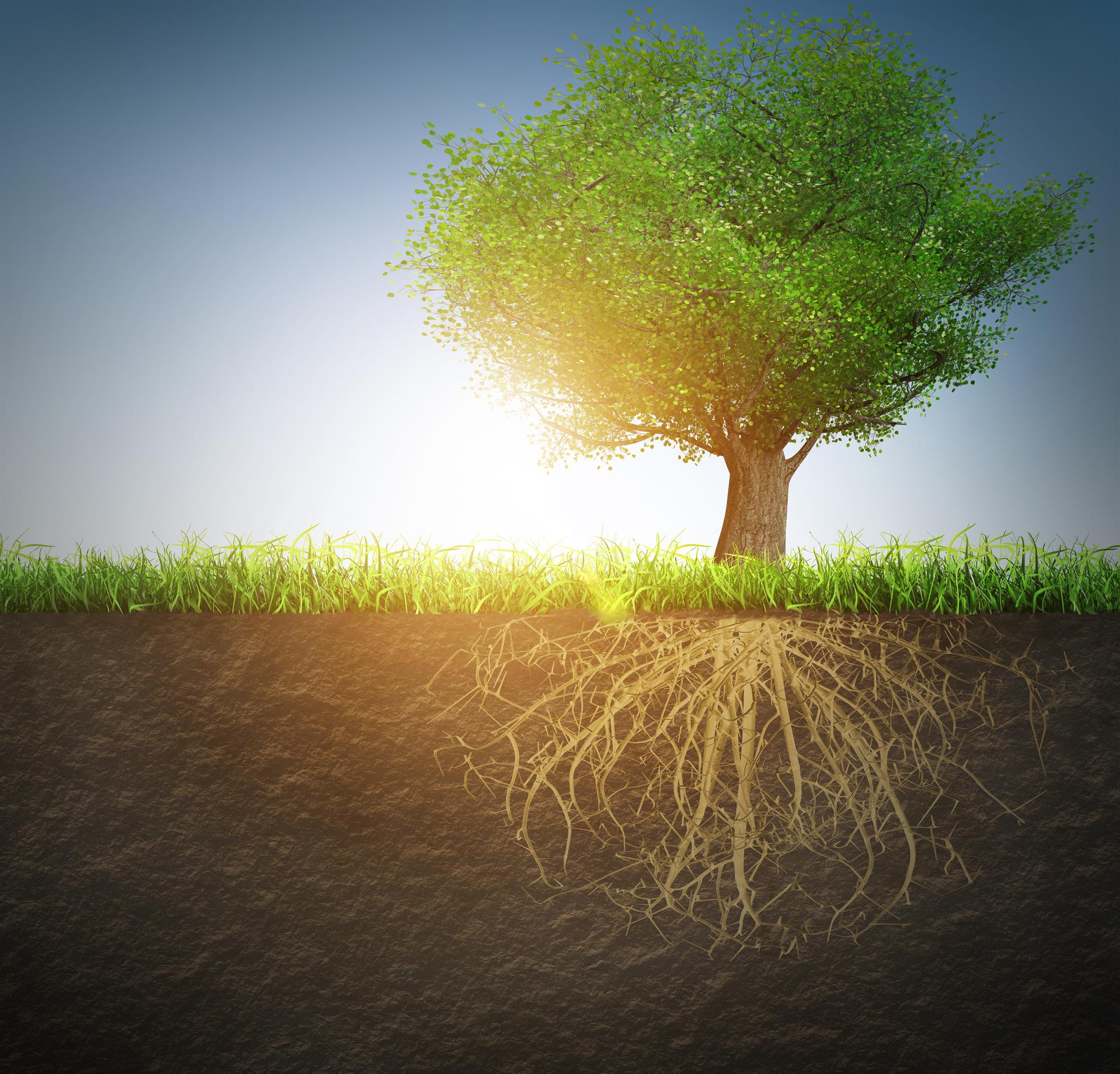 地球意識が目覚めたことで天と地の作業が加速します!
