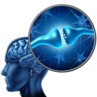 生きるためのシナプスを繋ぐ!!脳の指令をハイヤーな思考にすること。