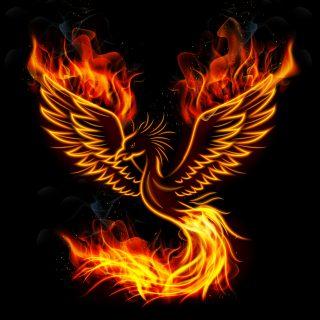 6月23日全力疾走開始~!火の鳥が日本列島に降りたつ!